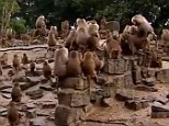 Mystery: Everything from an unseen predator to a natural disaster has been put forward as a possible explanation for the strange behaviour of the baboons