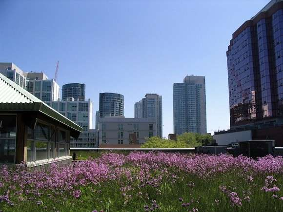 Glancing at a grassy green roof significantly boosts concentration