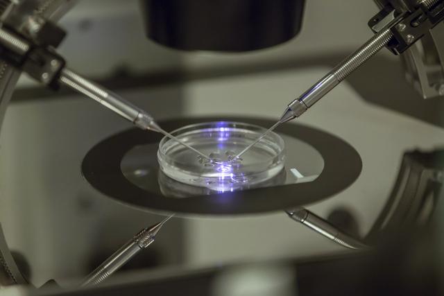 Zeugung im Reagenzglas: 2012 hatten sich 6321 Paare einer medizinisch unterstützten Fortpflanzung unterzogen.